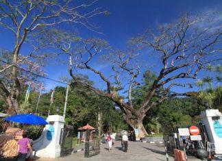 Penang Botanic Gardens, 130 years of Legacy